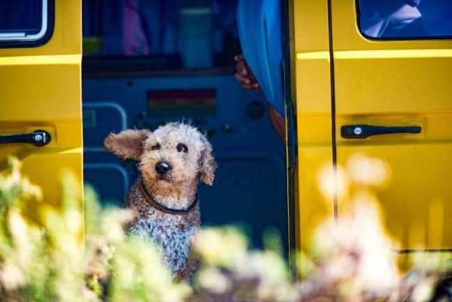 Dog at truck door.