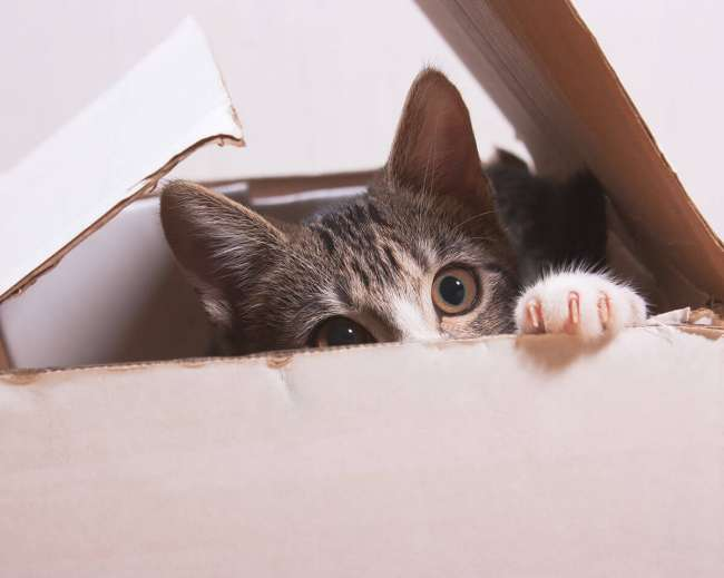 Cat hiding in box.